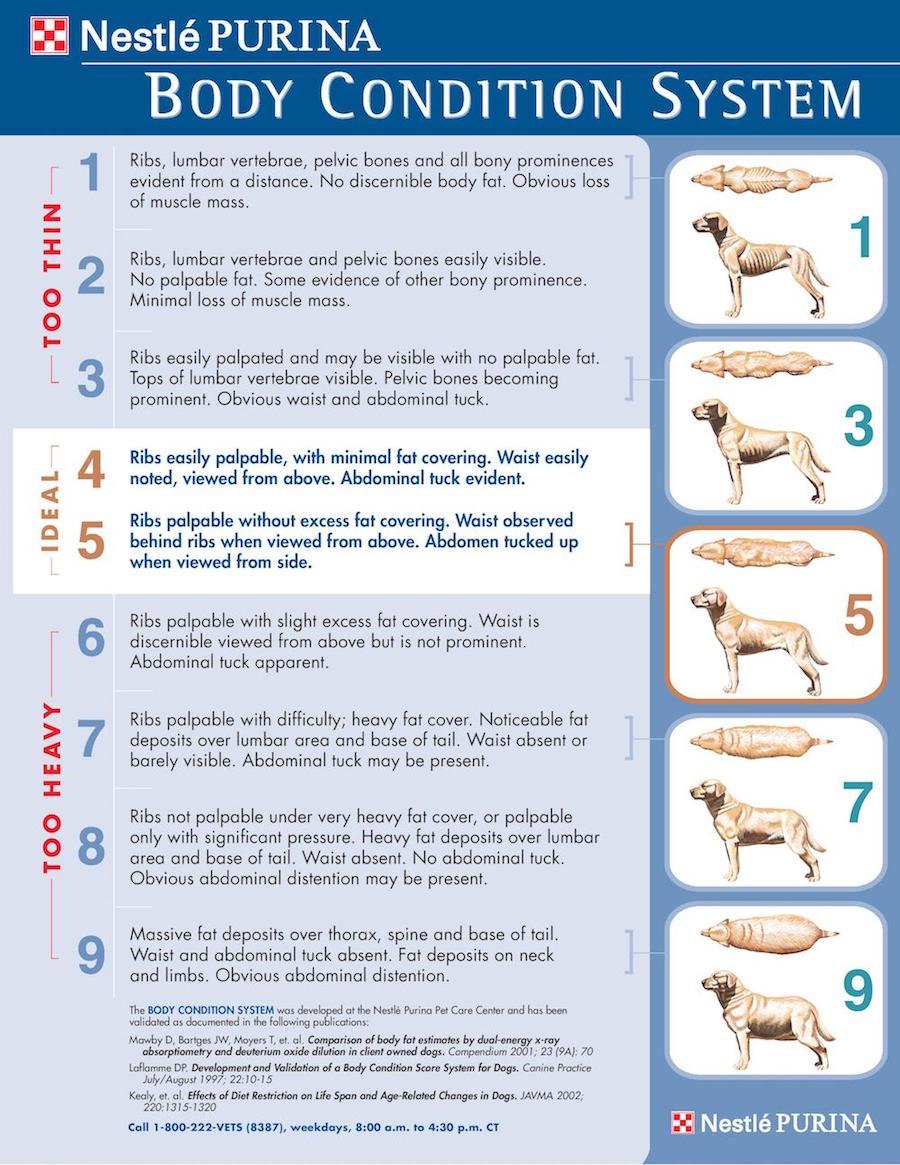 Calorie requirement calculator canine bcs nvjuhfo Images